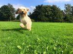 Telford Dog Walking
